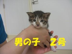 子猫HP用2